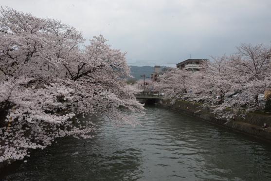 琵琶湖疏水⑥