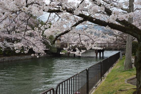 琵琶湖疏水⑧