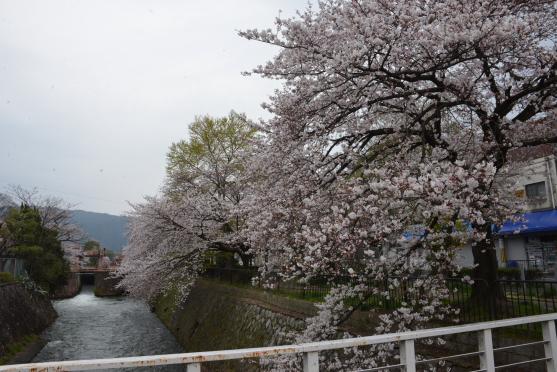 琵琶湖疏水⑨
