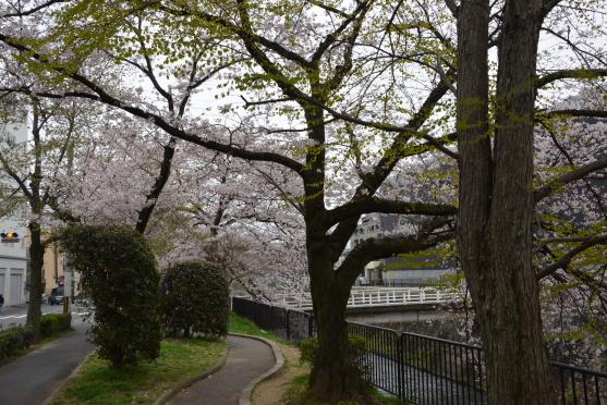 琵琶湖疏水⑩
