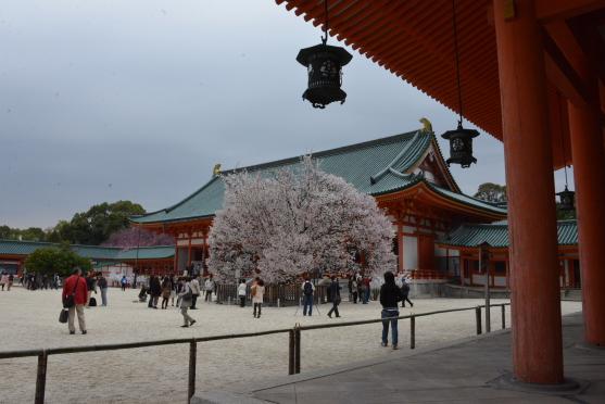 平安神宮大極殿と右近の桜