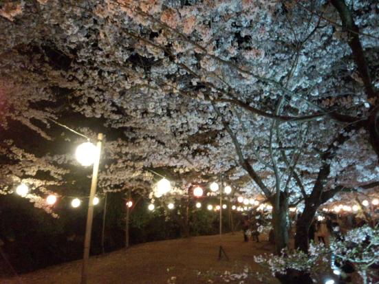 夜桜の栗林公園②