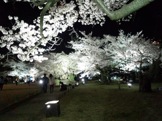 夜桜の栗林公園①