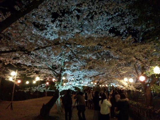 夜桜の栗林公園④