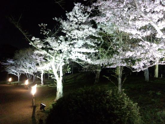 夜桜の栗林公園⑤