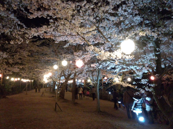 夜桜の栗林公園⑥