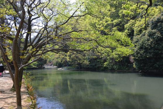 新緑の南湖①