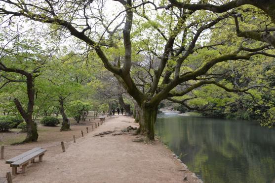 新緑の南湖②
