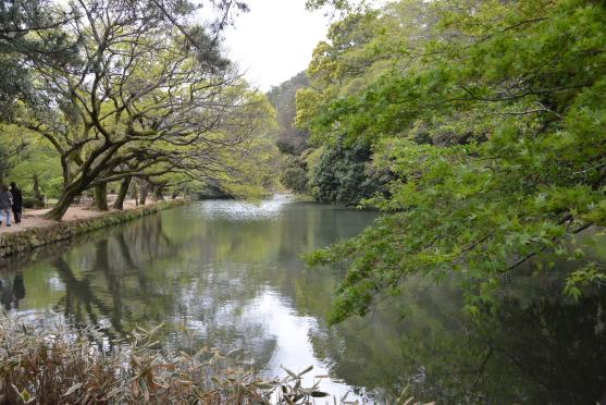 新緑の南湖③