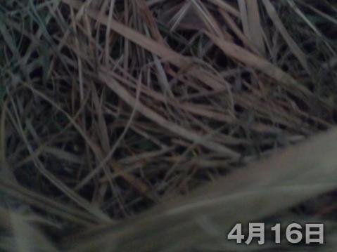 13-04-25-F03.jpg