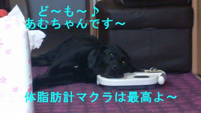 あむ横DSC_0194