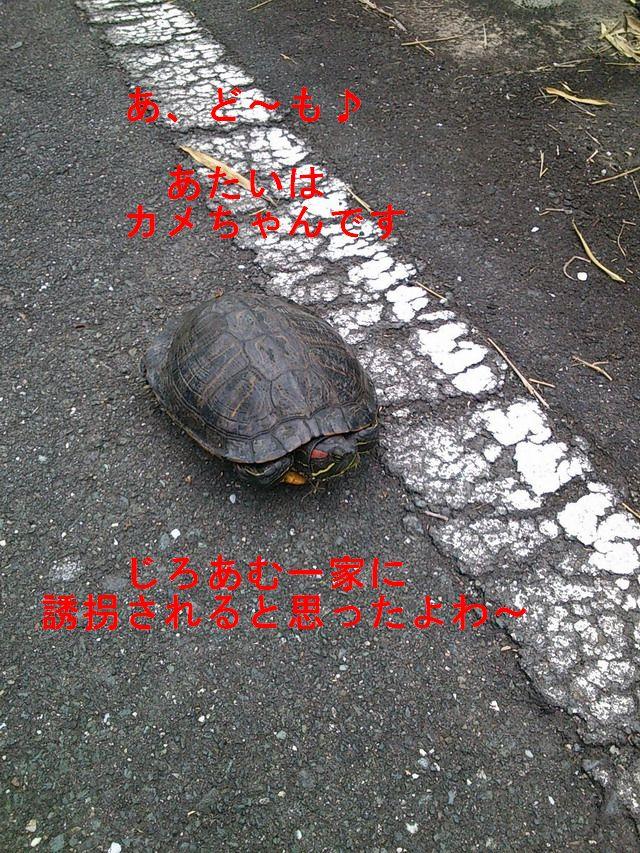 kameDSC_0730.jpg