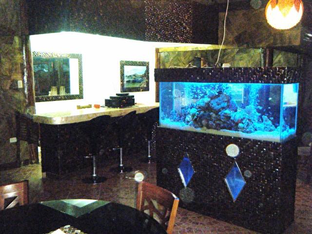 水槽と海水魚