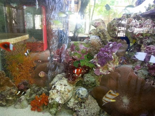 海水魚とライブロック