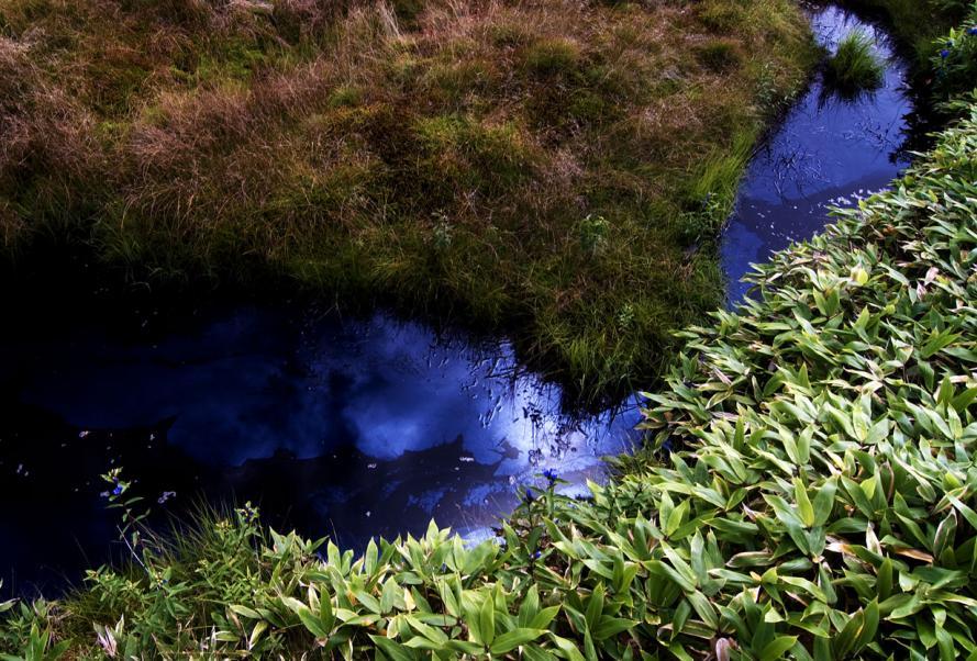 08-28-白根 油の小川