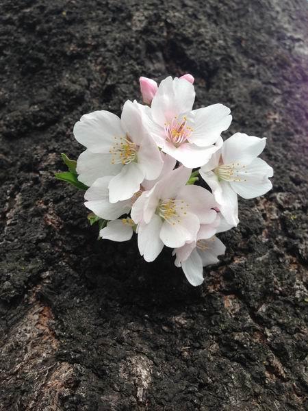 2013 Spring