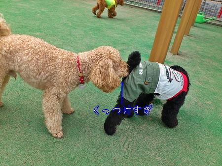 鶴ヶ島ドッグランジョナ5