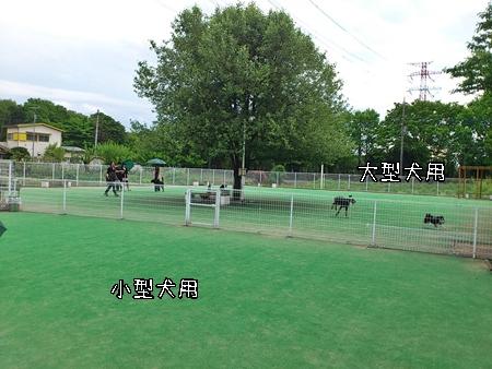 鶴ヶ島ドッグラン全体風景