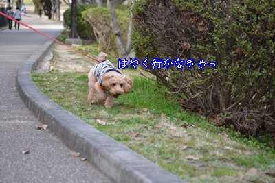 DSC_0740_20120325181054.jpg