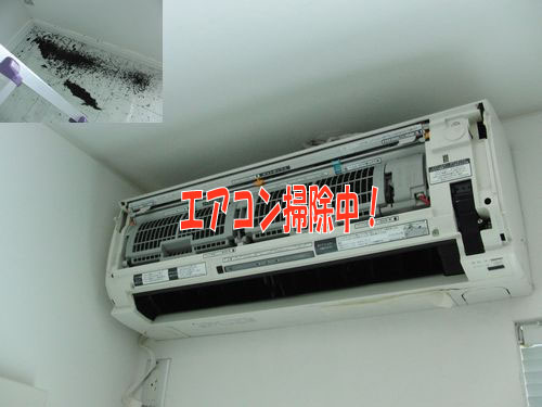CIMG7098.jpg