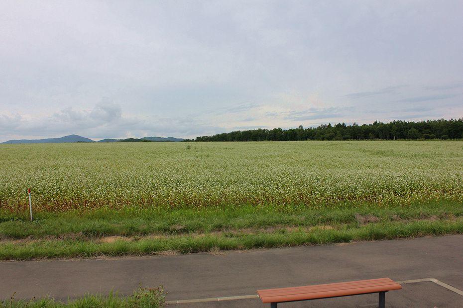 そばの里、幌加内町