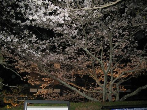 松阪城桜 002