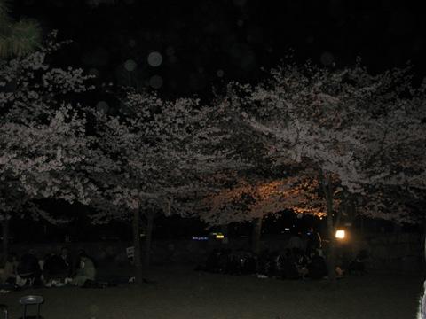 松阪城桜 005