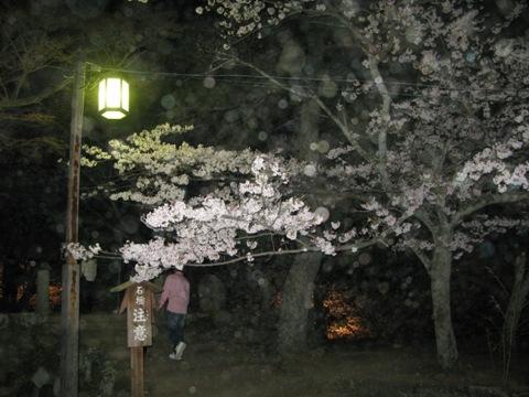 松阪城桜 013