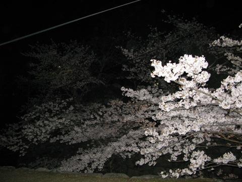 松阪城桜 012