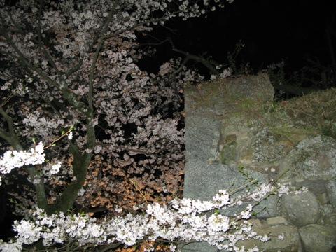 松阪城桜 021