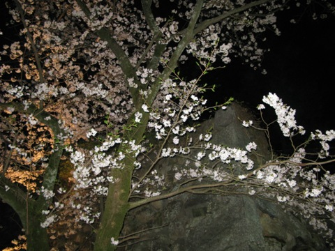松阪城桜 022