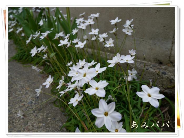 022_20130403205540.jpg