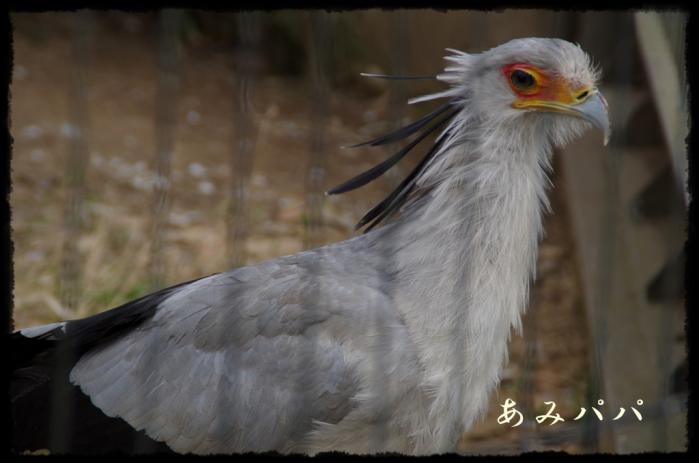 千葉動物園 (6)