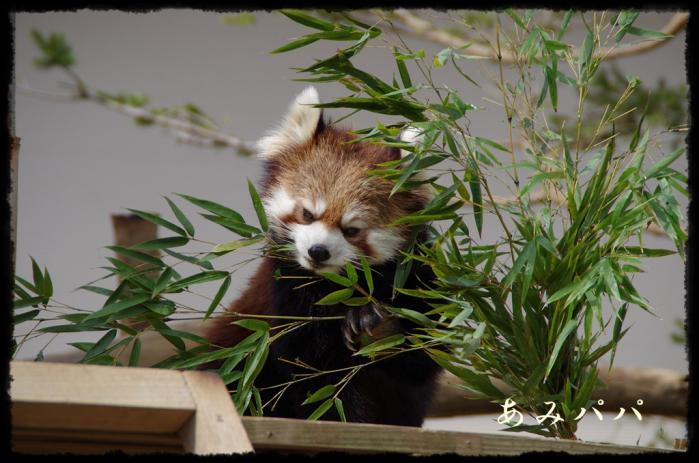 千葉動物園 (2)