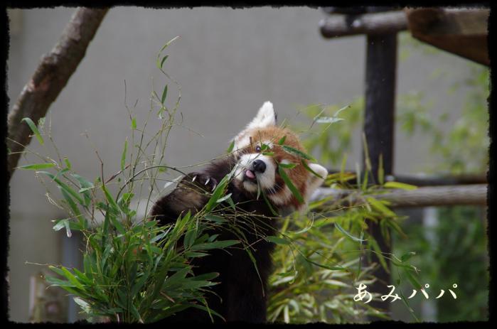 千葉動物園 (1)