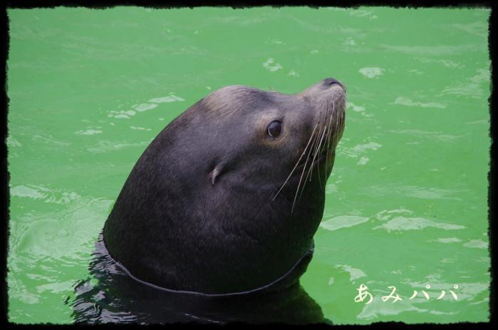 千葉動物園 (12)