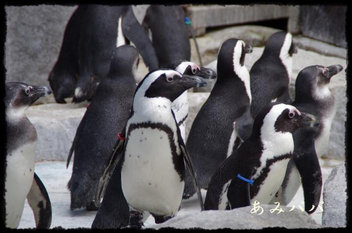 千葉動物園 (11)