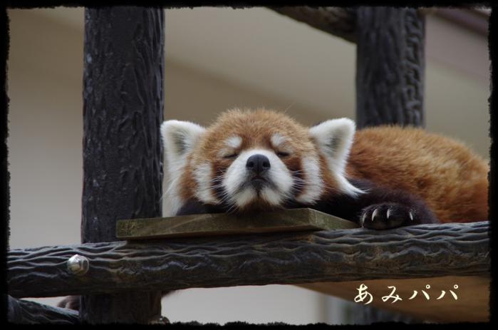 千葉動物園 (17)