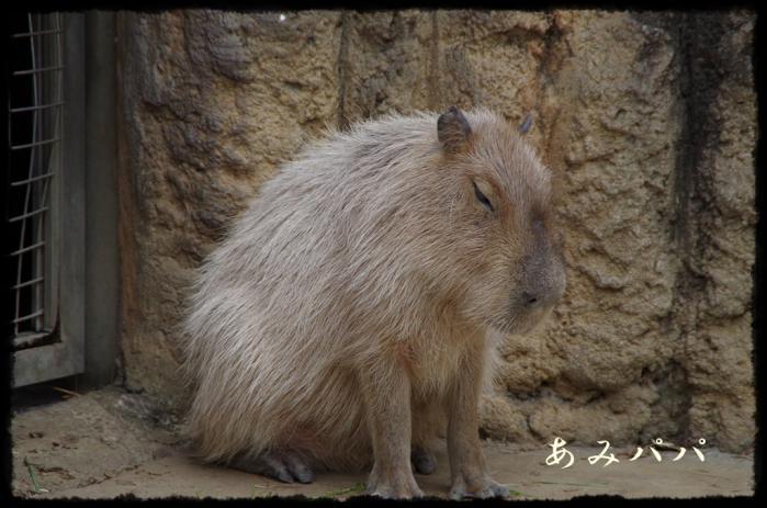 千葉動物園 (19)