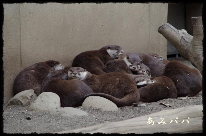千葉動物園 (16)