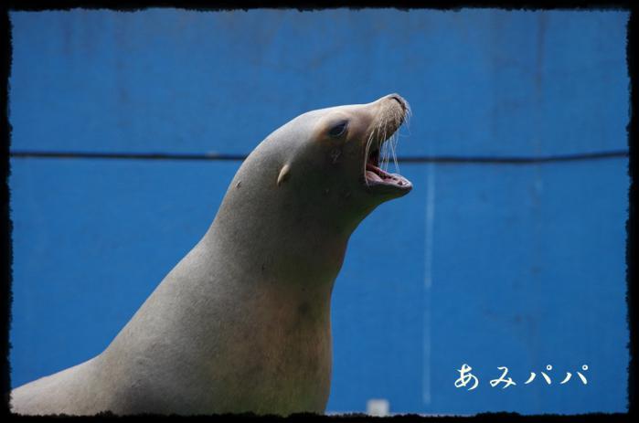 千葉動物園 (13)
