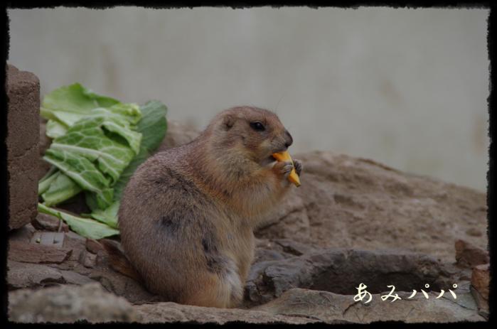 千葉動物園 (24)