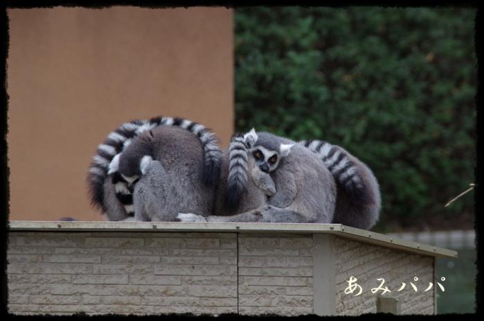 千葉動物園 (36)