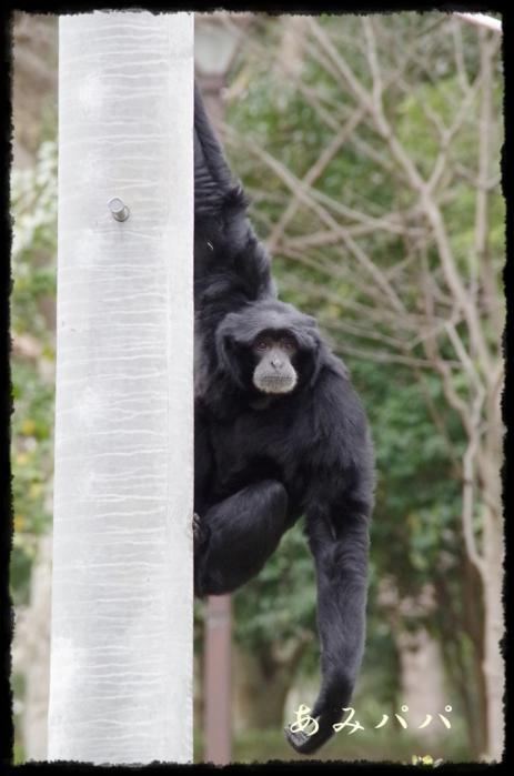 千葉動物園 (40)