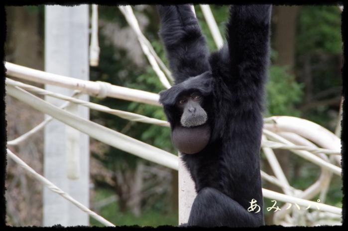 千葉動物園 (42)