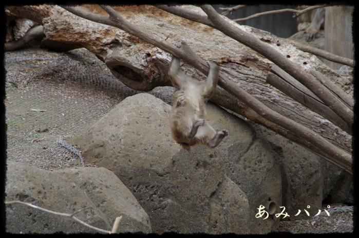 千葉動物園 (39)