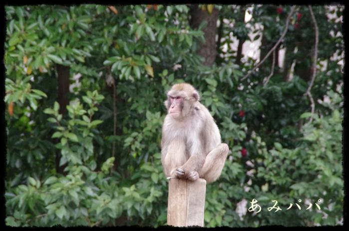 千葉動物園 (37)