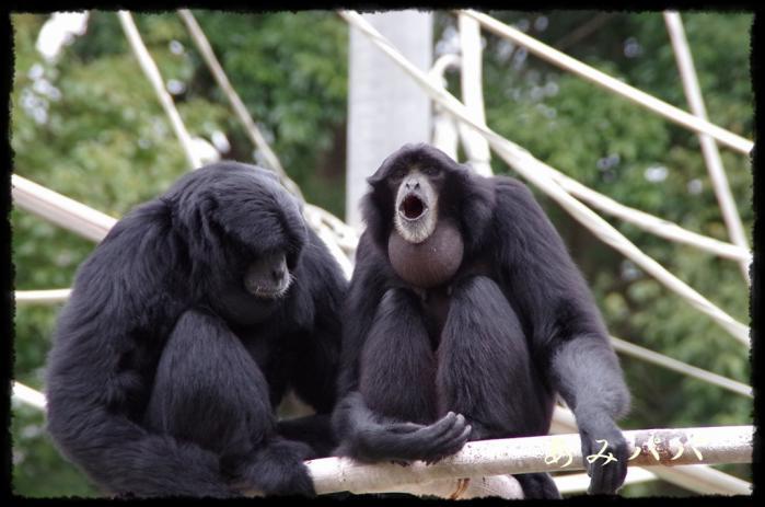 千葉動物園 (44)