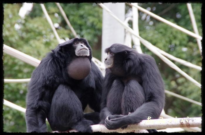 千葉動物園 (43)