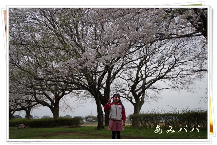 sakura (24)